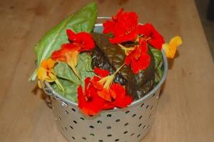 salad greens2 sm