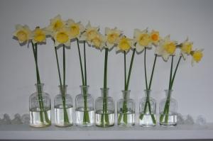 daffodils2 sm