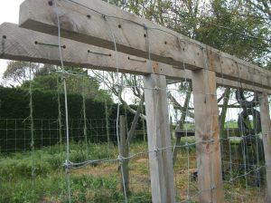 Trellis with fencing