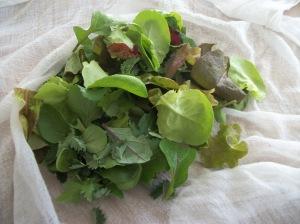 saladgreens1 sm