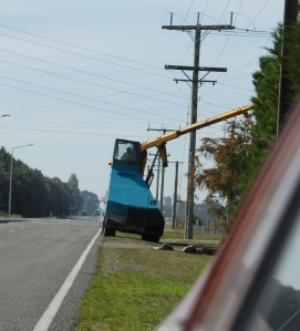 Here's another, snapped along the roadside on the way to town.