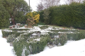 The herb knot in the snow a few years ago.
