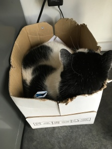 In the recycling box--a bit small for him.