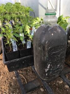 greenhouse-waterjugs2-sm