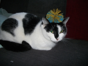 cat with ball on its head